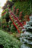 Escalier en fleurs