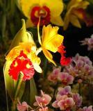 The Japan Grand Prix International Orchid Festival 2006 (2)