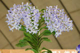 The Japan Grand Prix International Orchid Festival