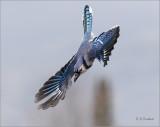 Blue Diva :-)