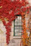 mill window in the fall...