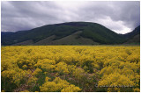 yellow monotony