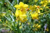 Ratama Flower