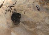 Nitre Bat Cave Knuckles Range Sri Lanka