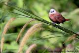 Birds at Padang Golf Raub