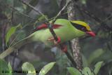 Birds of Fraser's Hill, Pahang