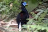 Bird at Taman Negara, Pahang