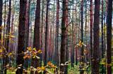 A Killing Forest, Lopochova