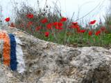 israel trail- שביל ישראל