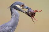 Upper Texas Coast Birding Locations