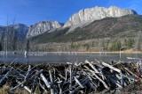 Yamnuska Beaver Ponds 2