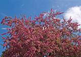 More spring blossoms ...