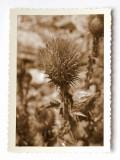 Ophir 1865