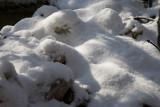 Nieve en el jardín