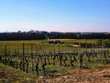In early spring vineyards have not any leaf yet....