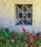 The window which didn't want to let the poppies in...