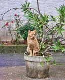 The cat which accepted graciously to pose...