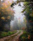 A path to the heart of the mist....