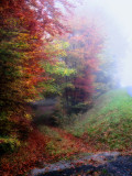 Following a forest path in the mist might take you to a parallel world....