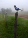 Presences in the fog