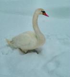 Wearing a duvet coat is very handy in winter....