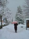 The red umbrella....