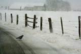Black and white walk....