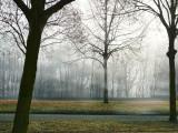The rising curtain of fog...