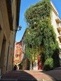 Urban greenery: a little bit of forest in the heart of old town…