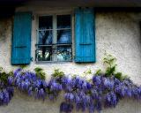 Follow the wisteria line....