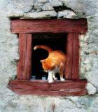 Secrets of a cat window