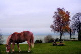 Lonely picnic of a melancholy horse