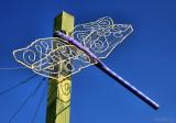 Dragonfly on Slender Reed