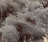Winter Grasses