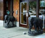 Elephants Children