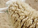 Really Raw Wool