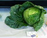 Best Cabbage in the County