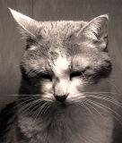 To Err Is Human ...Definitely Not Feline
