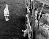 Little Girl with Sheep