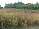 Solon Prairie looking SW