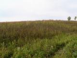 Prairie at Turkey Creek Preserve