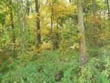 Hora Woods looking N