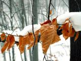 slady jesieni