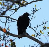 Black Vulture_7_El Sumidero