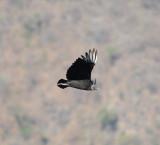 Black Vulture_8_El Sumidero