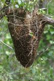 BeeHive (Killer Bees)