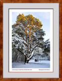 Sunlit Canopy Clumber Park edits web framed 9232.jpg