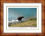 Jasper-Icefield-Parkway-Grizzly-Bear-1-10-inch-webtitled framed-4636.jpg