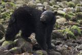 pbase bear 2.jpg