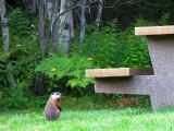 peureuse marmotte